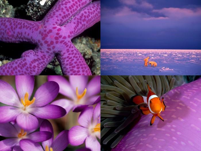 Жизнь в цвете: лиловый