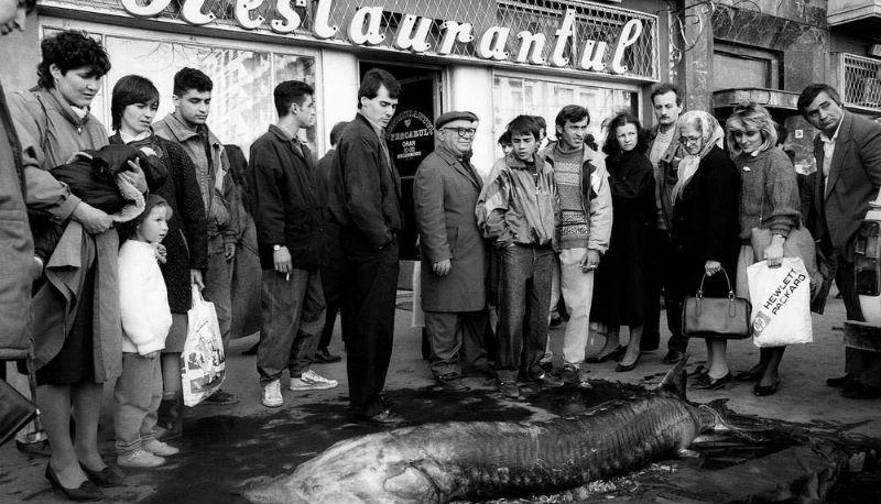 Суровая Румыния 90-х, где стада овец перегораживали оживленные улицы