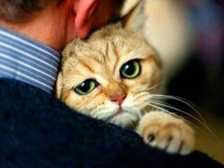 Картинки по запросу фото обниматели котов