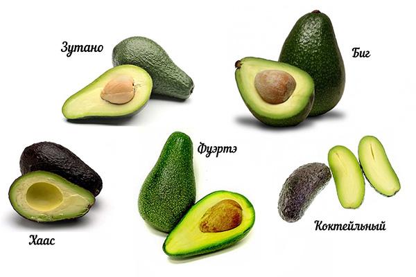 Разные Ñорта авокадо