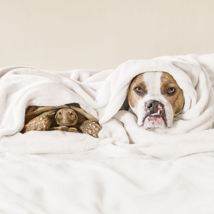 Эта дружба между собакой и черепахой