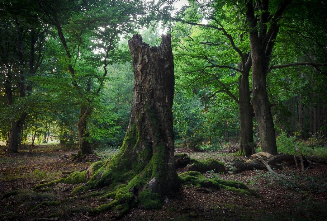 Волшебные фотографии лесов в…