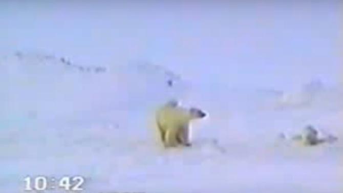 Медвежонок попал в ловушку, и даже мама не могла его спасти. Но вдруг появились они…