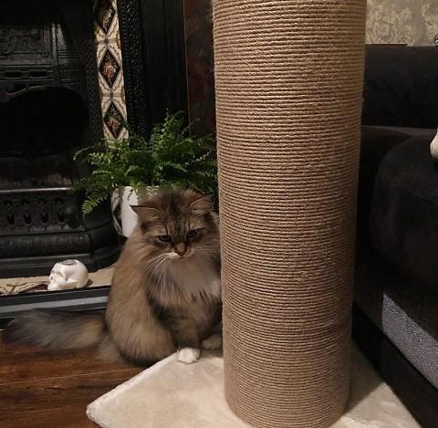 Для некоторых кошек подойдет тот же прием, что ипри первом знакомстве, но более проработанный. Когда животное проснется, заботливо возьми его наруки иотнеси ккогтеточке. Подними лапы...