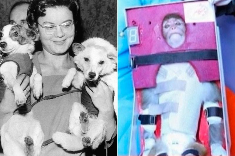 animalspace00 История покорения космоса животными