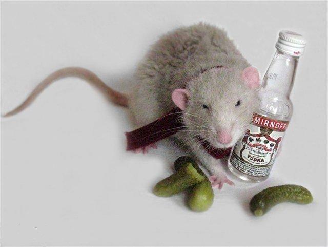 Полицейские обвинили крыс в пропаже 900,000 литров конфискованного алкоголя