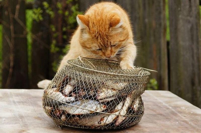 Как быстро почистить рыбу при помощи китайских палочек для еды
