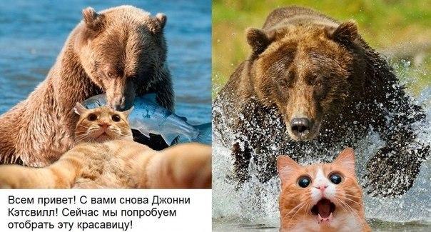 Прикольные мемы про кота блогера