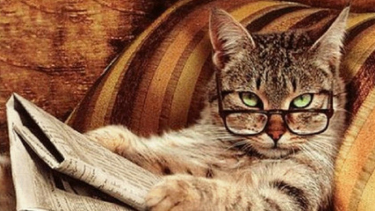 Сообразительные коты