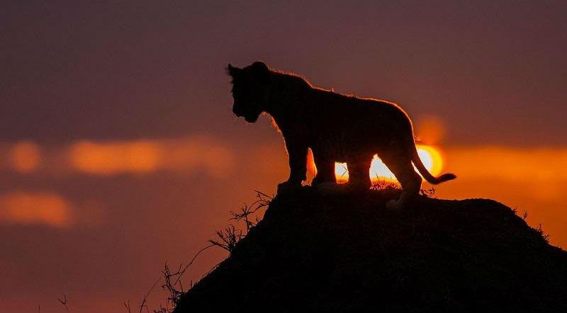 Потрясающие африканские закаты от Пола Гольдштейна