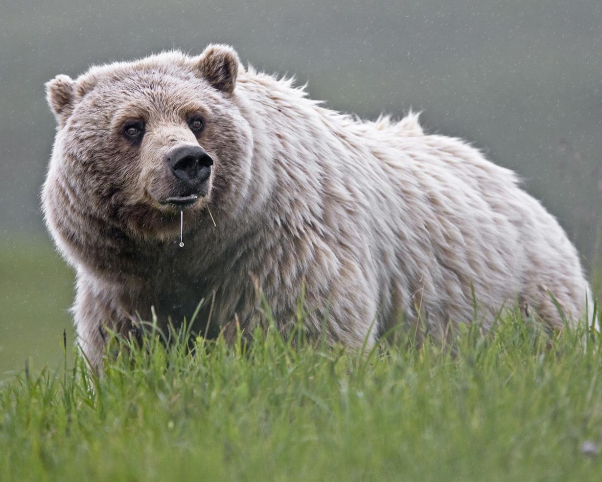 США. Аляска. Прогулка по Национальному парку Денали. (NPS Photo/Ken Conger)