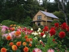 Какие цветы и декоративные растения посадить на даче