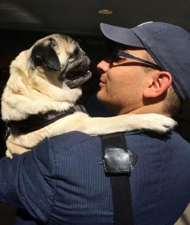 Старенькому псу, который скучает по хозяину, нашли игрушечную замену