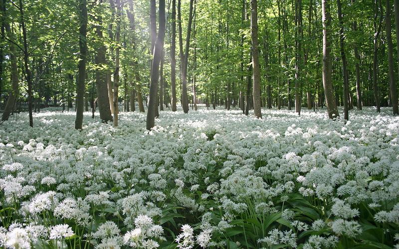 Весенний лес обои на рабочий стол