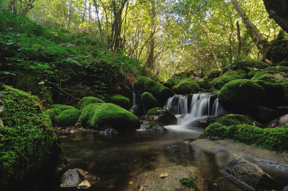 Мистический лес страны Басков