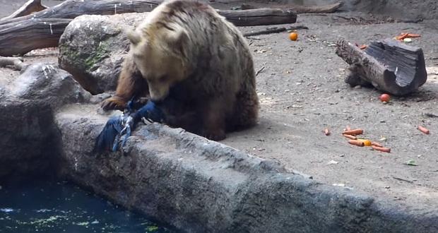 Поразительное видео—медведь не дал вороне утонуть