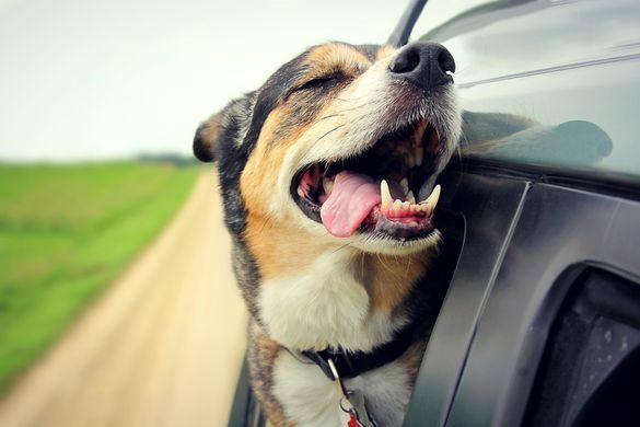 В Китае пес въехал на машине в витрину магазина