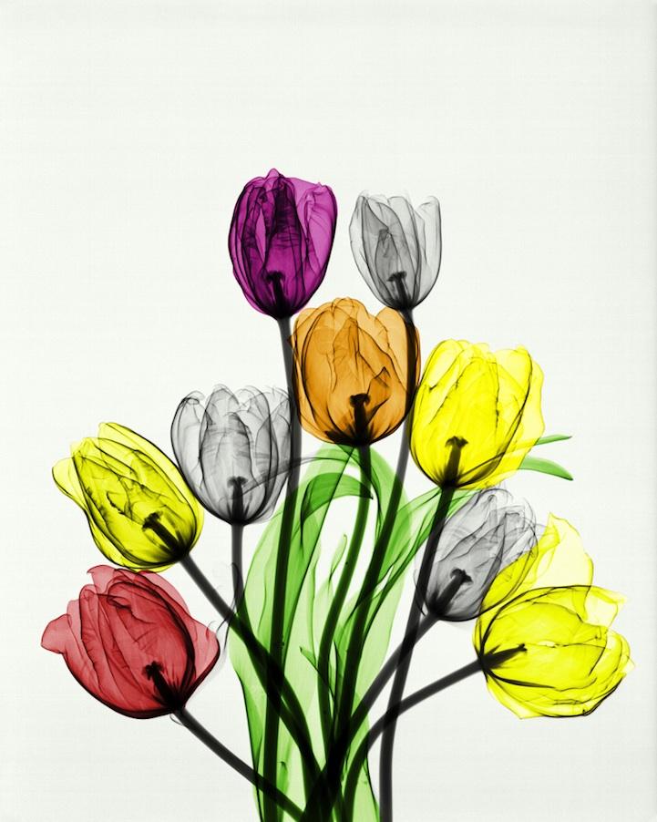 Рентгеновские снимки как искусство от Арье Вант Рита
