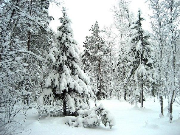 Защита от холода зимой на пр…