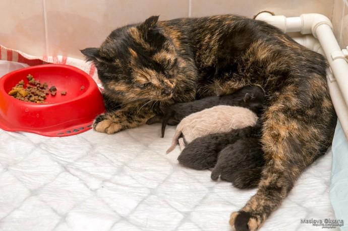 Беременная бродячая кошка пришла рожать в ветклинику Новосибирска