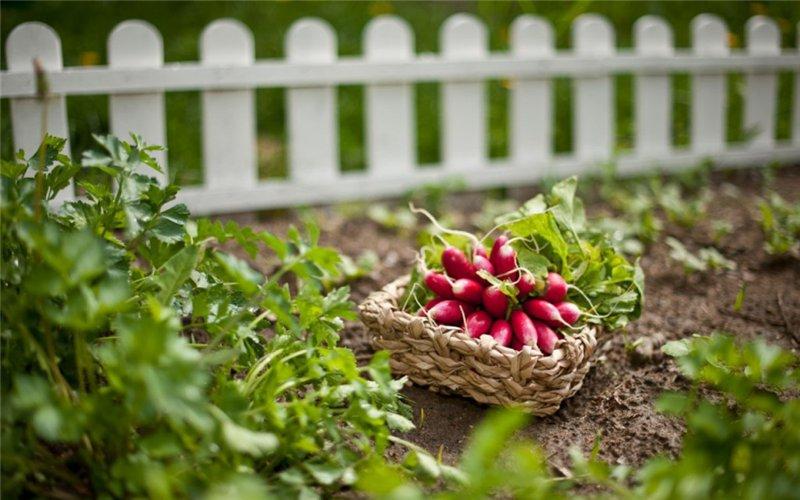 Французский огород – что же это такое?
