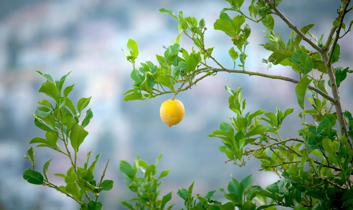 «Из каждого лимона нужно уметь сделать лимонад»