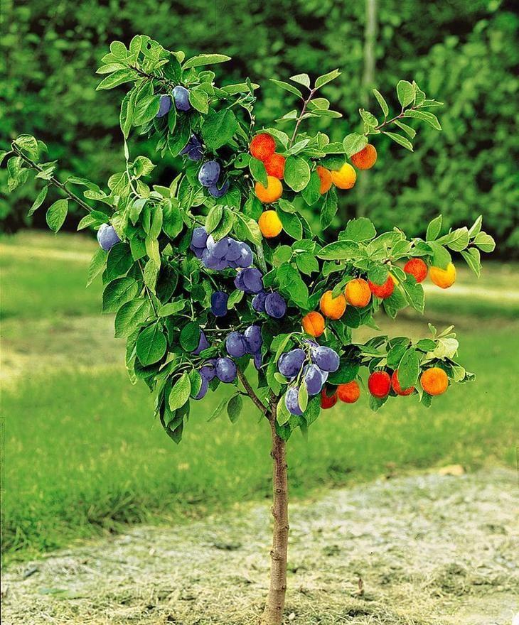 Да будет дерево-сад!