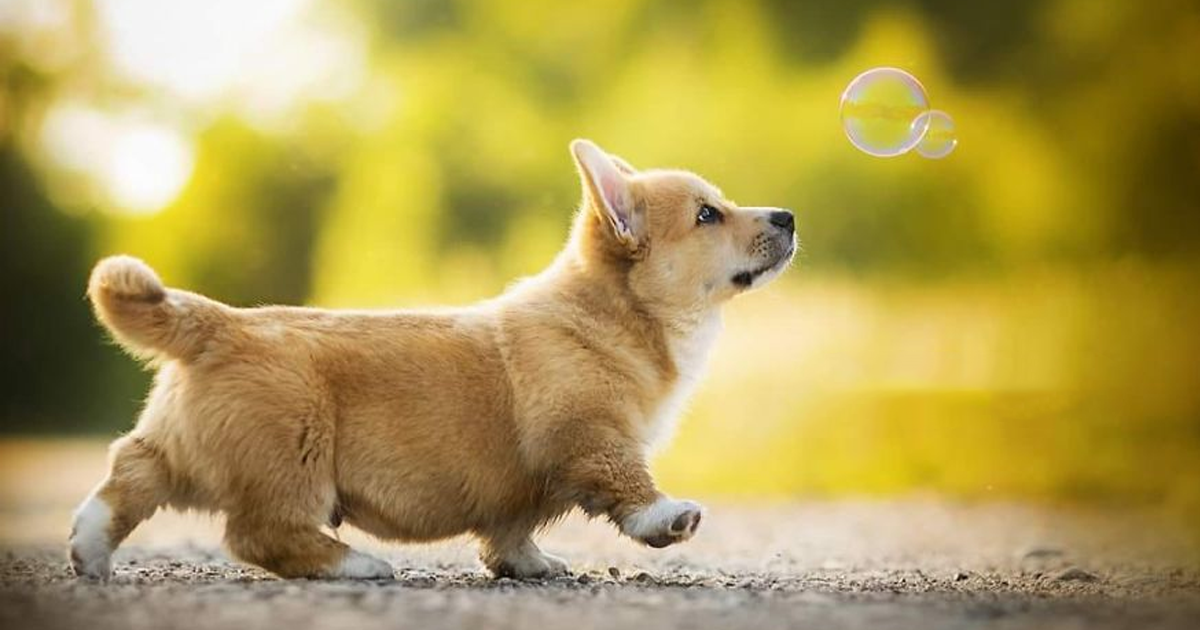 I Capture The Whimsical Side Of Dogs In My Photography (49 Pics)