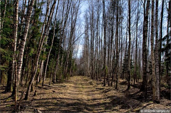 Прогулка по весенним просёлкам