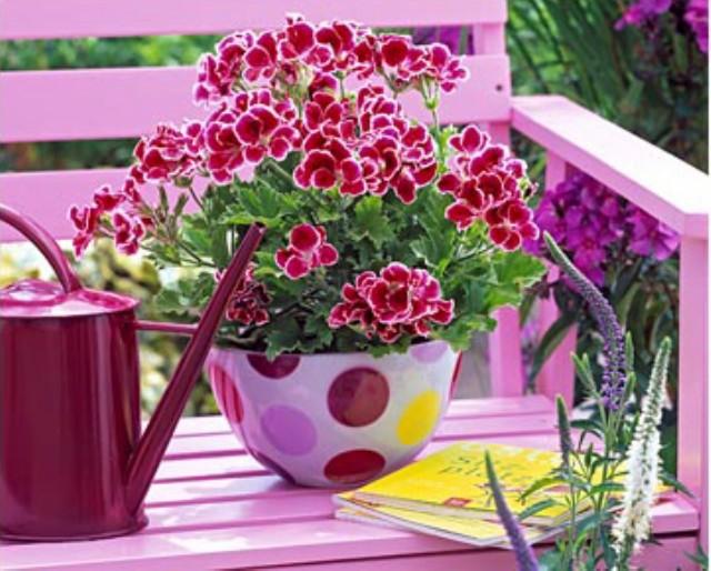 Другие комнатные растения Записи в рубрике Другие комнатные растения Дневник Татьяна_Тухтина : Блоги на Труде