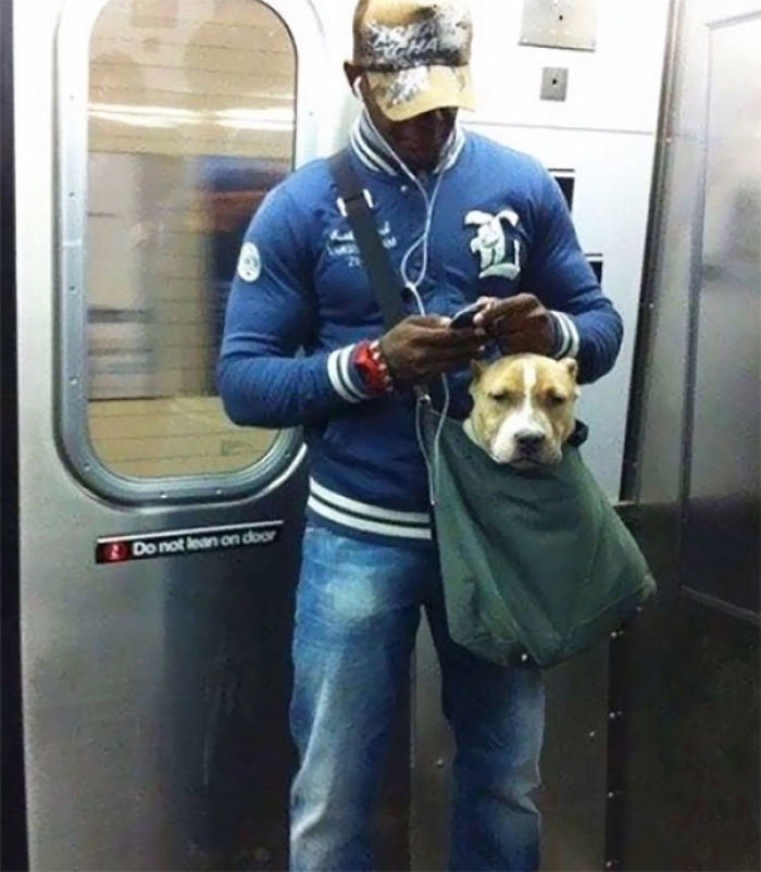 The New York Subway System Bans Canines Unless They Can Fit In A Small Bag, So This Guy Trained His Pit-Bull To Calmly Sit In His Small Bag
