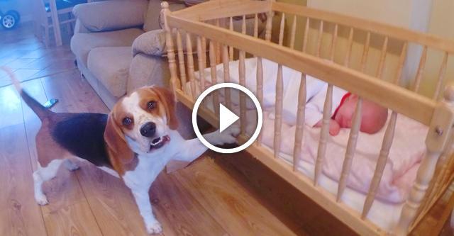 Когда в доме появилась малышка — пса как подменили...