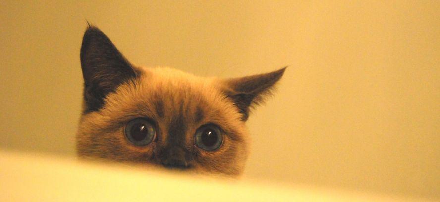 ДУДОНЯ! Или история моего кота Федора!