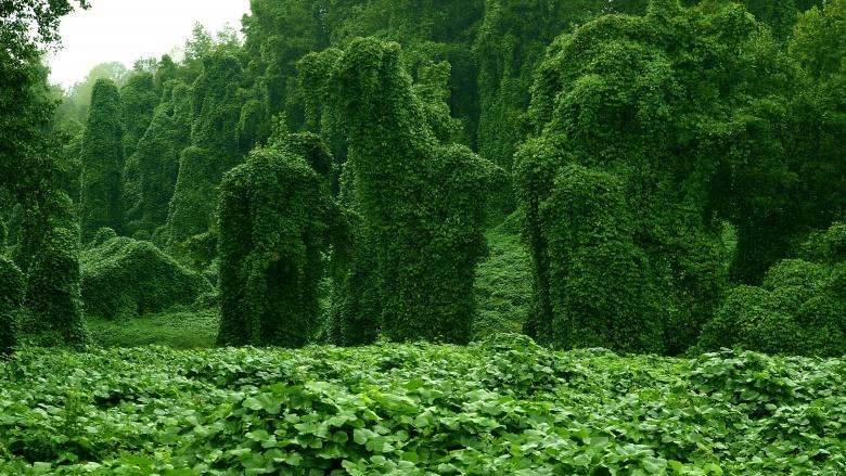 Растения из кошмаров, которые существуют на самом деле