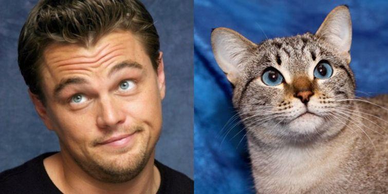 cat look like, коты похожие на знаменитостей, коты похожие на нечто другое