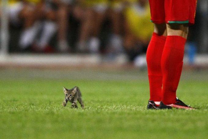 Когда животные прерывают спорт
