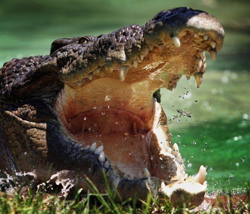 Крокодилы в Северском Донце