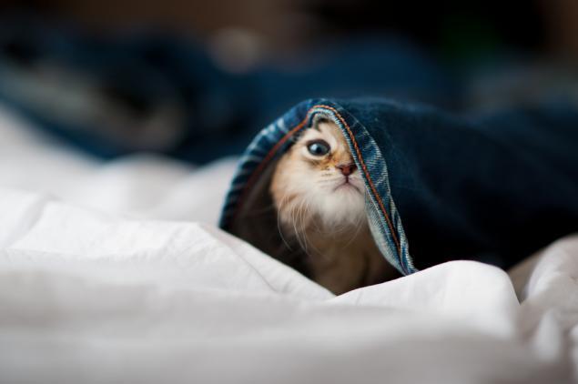 Если у  вас дома завелся маленький шалун, срочно хватайте фотоаппарат...