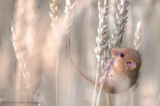 Забавные фото победителей конкурса Wildlife Photographer of the Year (15)