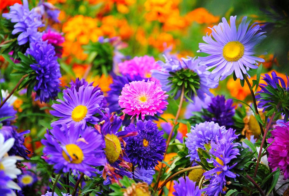 Лекарственные растения цветы