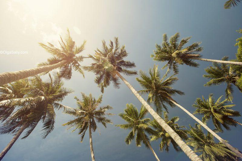 Кокосовые пальмы в Таиланде