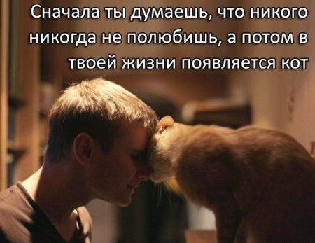 Всемирный день кошек! Всех кото-любителей и пушистиков с ПРАЗДНИКОМ!
