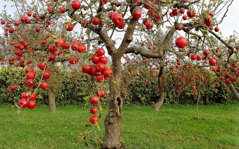 Картинки по запросу Обследуйте деревья в саду