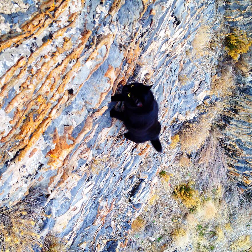ТЕРЕМОК. Кошка-скалолаз ходит в горы со своим хозяином