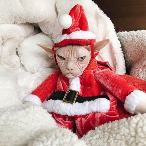 Они очень ждут Рождество