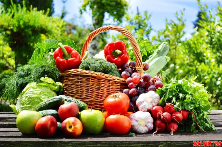 Как вырастить такие же красивые овощи,05.jpg