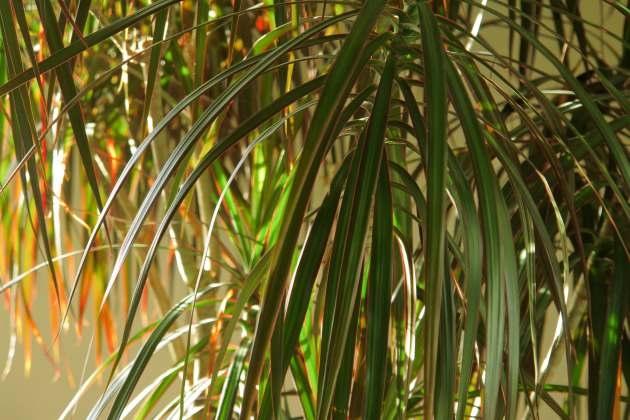 Растения - комнатные фитофильтры