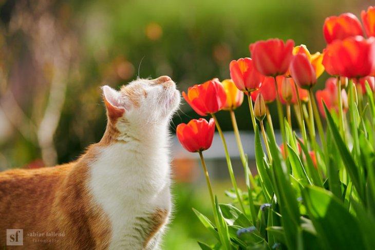Казу — слепой, но бесстрашный кот