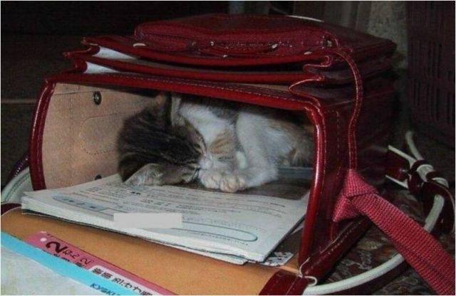 """"""" Тихий час"""" для кошки!.."""
