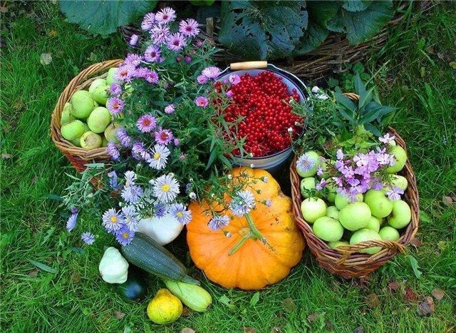 9 способов использования пищевой соды в саду